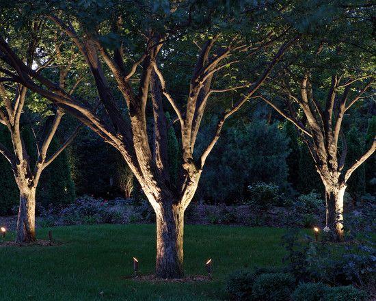 Trees Landscaping Design